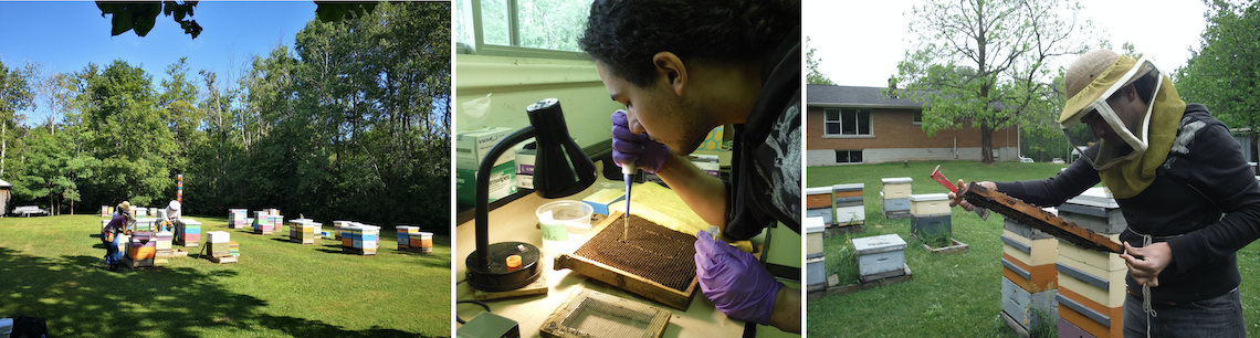 Three pictures showing researchers working on the project