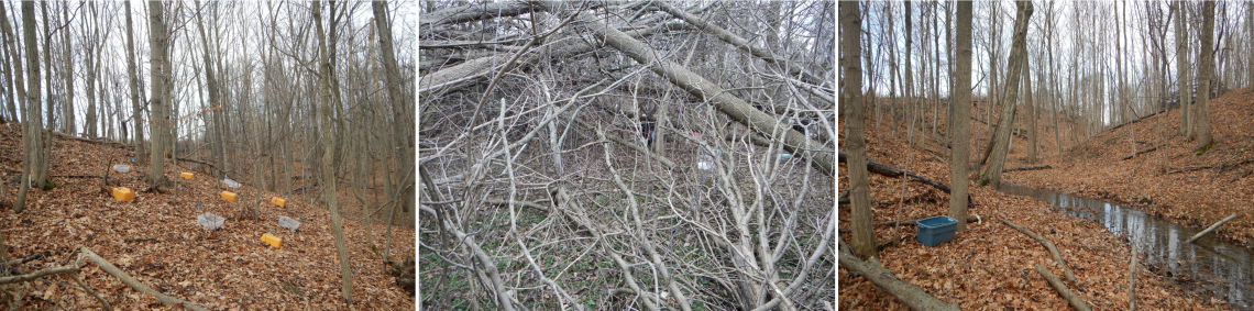 Three pictures each showing a forest with some experimental set-up